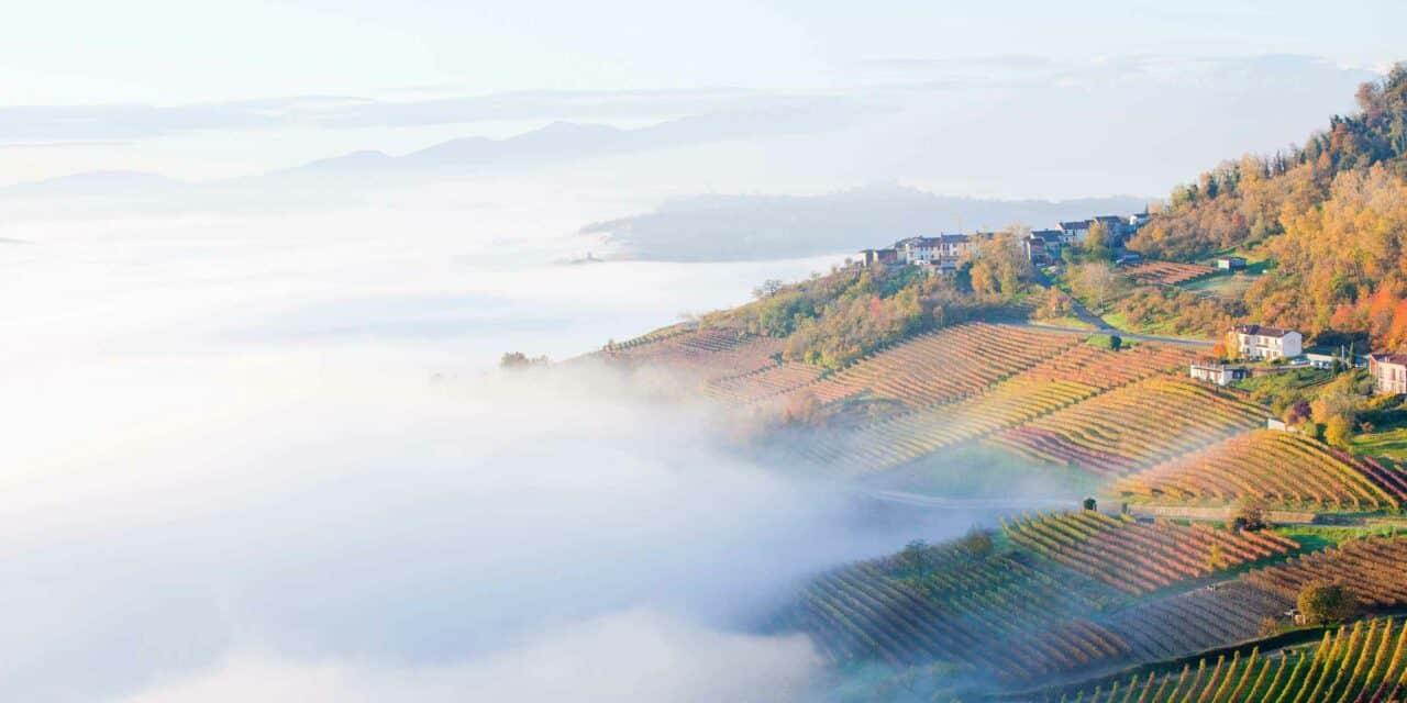 Bella Italia: Wein und Trüffel aus dem Piemont
